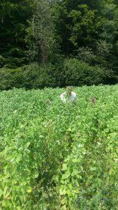 quinoa val de ruz neuchatel