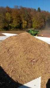 Quinoa val de ruz
